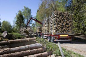 transport dłużycy z lasu